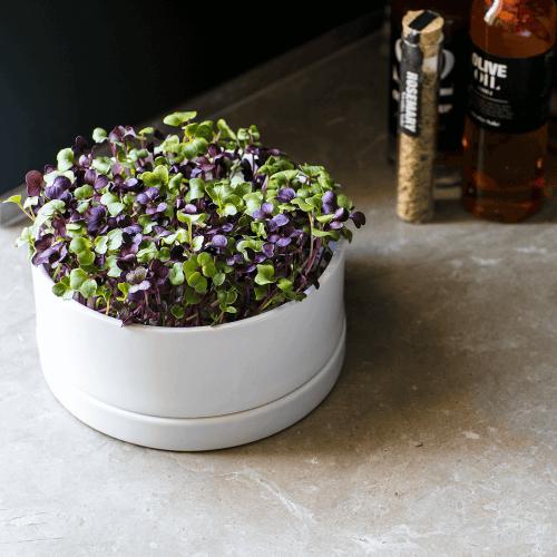 Table garden odlingskit