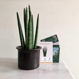 Houseplant Care card sansevieria - Skötselråd krukväxter