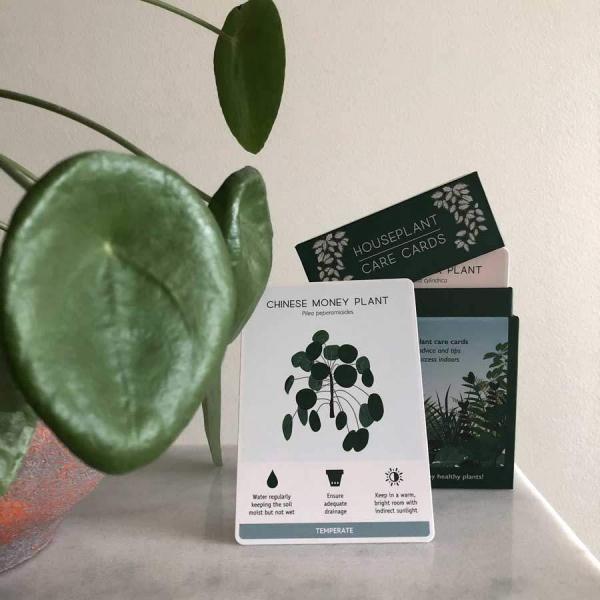 Houseplant Care card elefantöra - Skötselråd krukväxter
