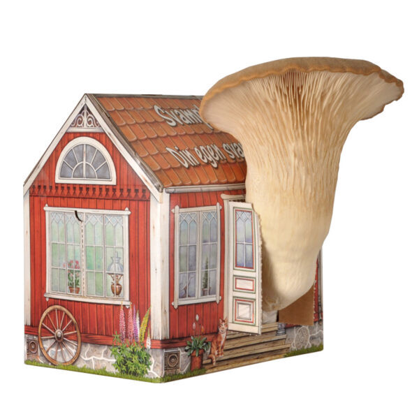 svamphuset kungsmussling - odla svamp hemma