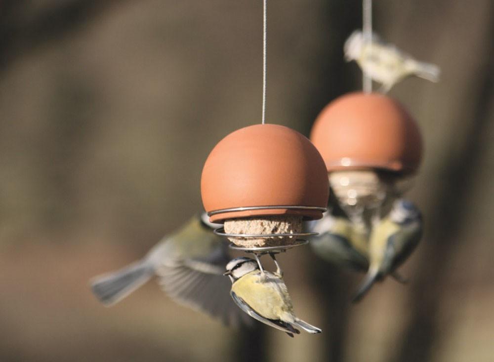 Så fotograferar du fåglar som en proffs utan dyr utrustning