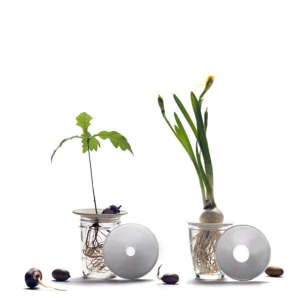 Groningsplatta Botanopia för odling av ekollon, avokado och kastanjer
