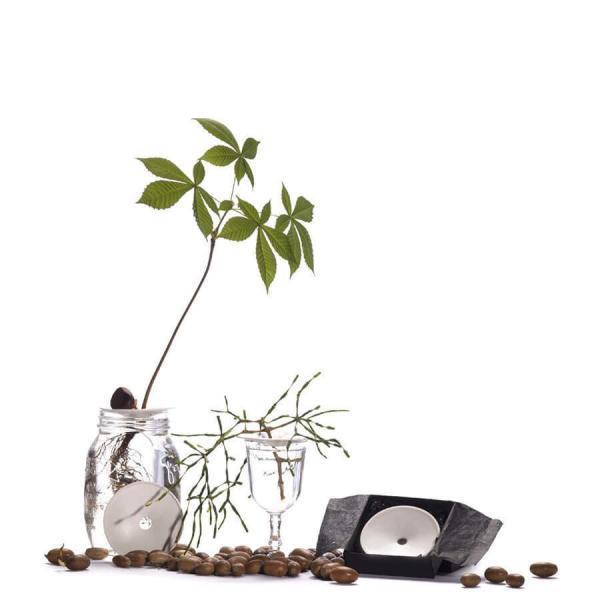 Groningsplatta Ekollonvas för odling av ekollon, avokado och kastanjer