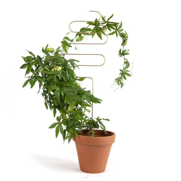 Växtstöd Squiggle