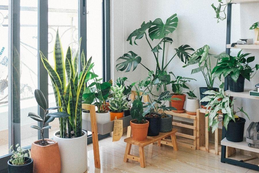 De 8 trendingaste växterna 2021
